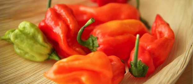 Learn to Cook Mexican Dishes with Demuths