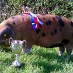 West Country Quality Meat awarded for contribution to farm animal welfare