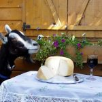 Unpasteurised goats' cheeses from Norsworthy Dairy