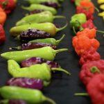 Devon Chilli Fiesta at RHS Garden Rosemoor
