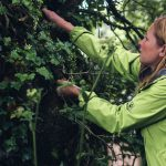A Summer of Foraging Land & Sea