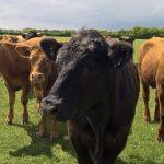 Sustainable Farming: Birds & Herds