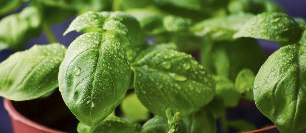 How to Create an Edible Indoor Garden