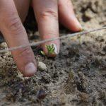 Little Cooks: Super Soil