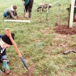 Spring Sowing with Harvest Workers' Co-op, Okehampton