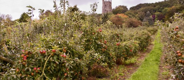 Bradleys orchards
