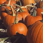 Bumper Pumpkin Fun This October