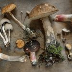 Forage for Fungi at Sculpture by the Lakes